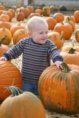 Pumpkin Patch 009